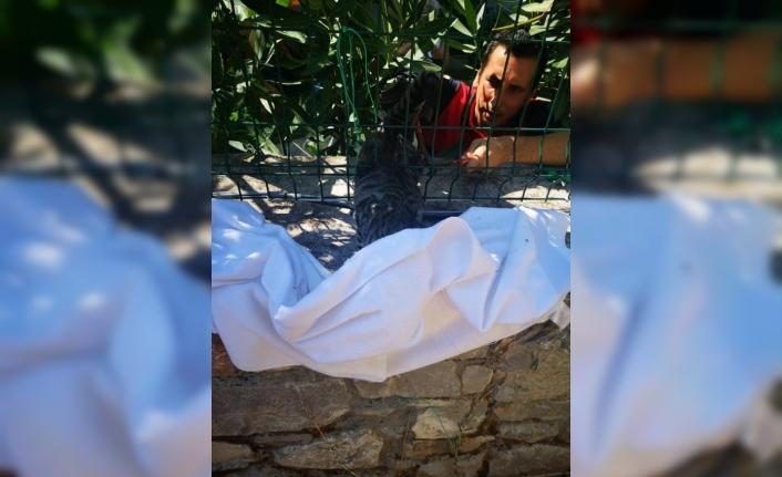 Fethiye'de Bahçe Telinde Sıkışan Kedi Kurtarıldı