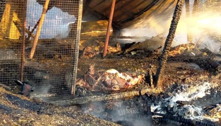 Bodrum'daki Ağıl Alevlere Teslim Oldu