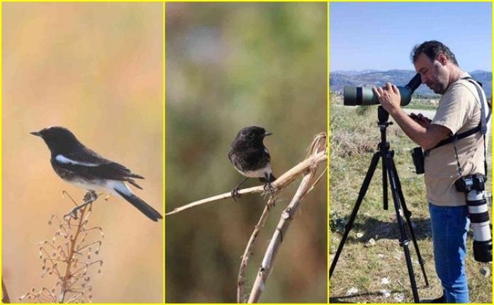 Türkiye'de İlk Defa Görülen Kuş Türü Büyük Heyecan Yarattı