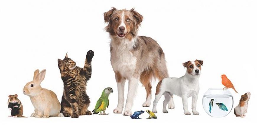 Hayvan Hakları Yasa Teklifi Meclise Gidiyor