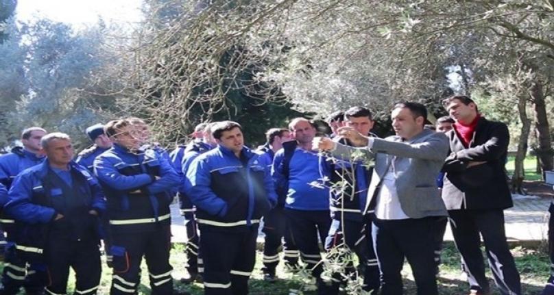 Büyükşehir'den 'Zeytin Budama' Eğitimi