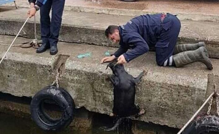 Dalyan'da Kanala Düşen Köpek Belediye Ekiplerince Kurtarıldı!