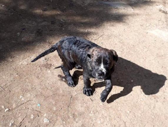Fethiye'de 10 Metrelik Kuyuya Düşen Köpek Kurtarıldı!
