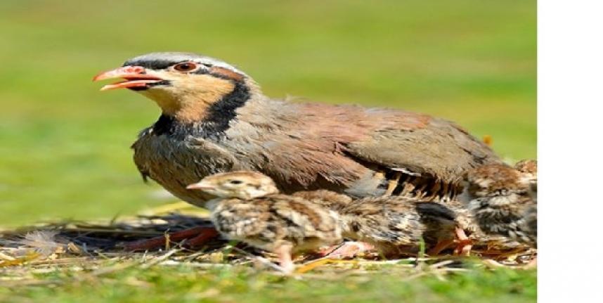 30 Tür Kuş ve 6 Tür Memeli Hayvanın Avlanması Yasaklandı