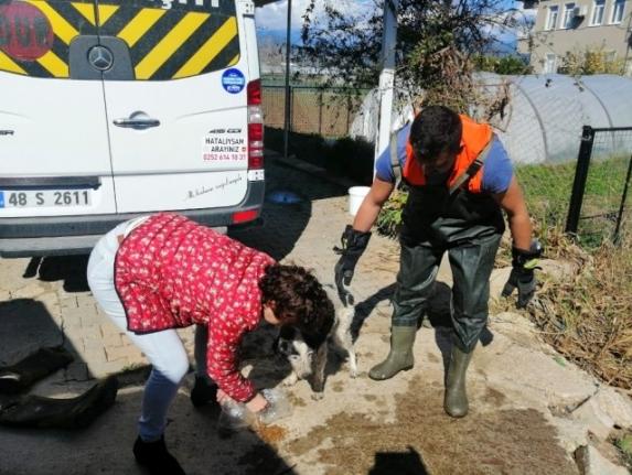 Fethiye'de Su Kanalında Mahsur Kalan Köpek Kurtarıldı