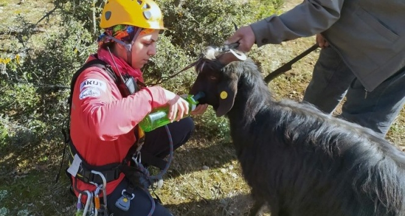 Sarp Kayalıklarda AKUT'tan Keçi Kurtarma Operasyonu