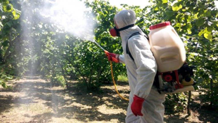 Koronavirüsten Sonra Süne Böceği İstilası!