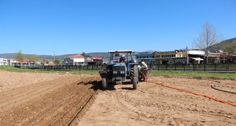 Muğla'da Tarımsal Faaliyetler Devam Ediyor