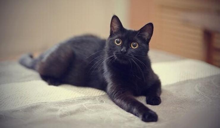 Siyah Kedileri Öldürüp 'Kovid-19'a Çare Diye Yiyorlar' İddiası!