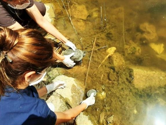 Bodrum'da 300 Kaplumbağa İçin Kurtarma Operasyonu