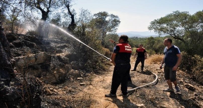 Milas'ta Zeytinlik Arazideki Yangın Söndürüldü
