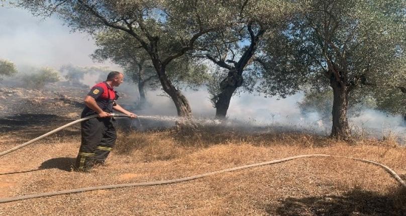Milas'taki Orman Yangını 17 Saatte Söndürüldü