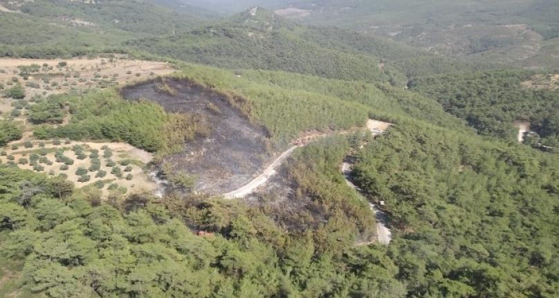 Muğla Orman Bölge Müdürlüğü'nün Hızlı Müdahalesi Faciayı Önledi