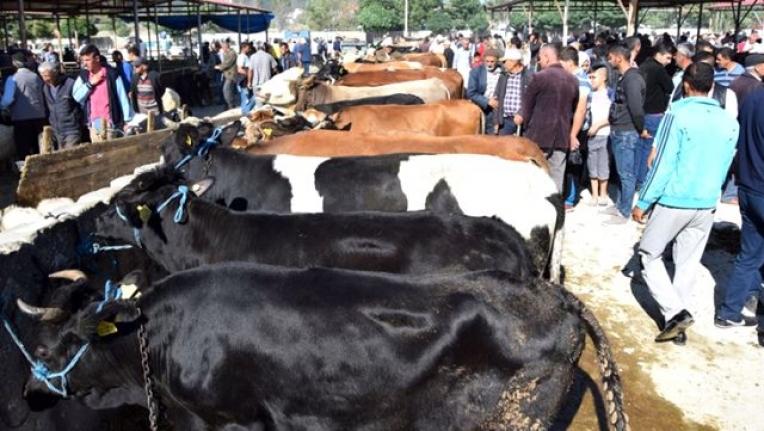 Yetiştiricilerin Elde Kalan Kurbanlıklarını Et ve Süt Kurumu Alacak
