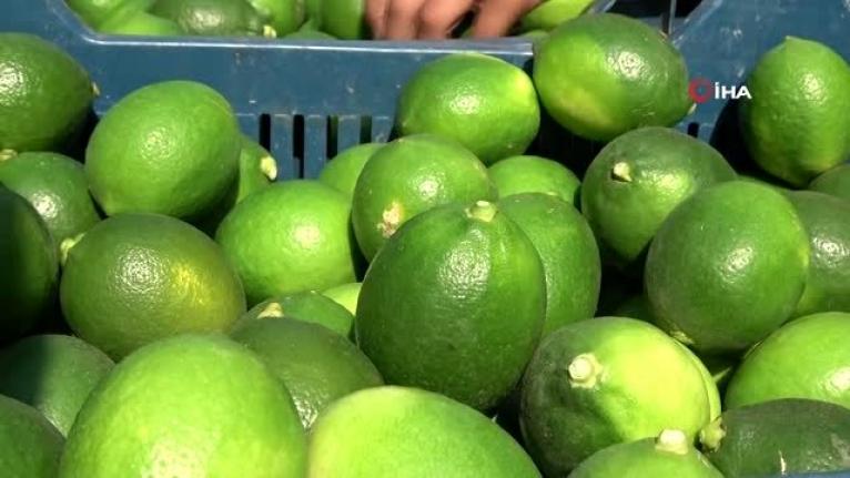 Limondan Kötü Haber: Fiyatlar Yüksek Olacak