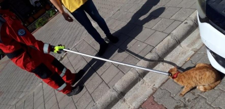 Fethiye'de Otomobilin Motoruna Sıkışan Kedi Kurtarıldı