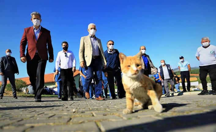 Muğla Geçici Hayvan Bakımevi'nde 2 Bin 97 Can Dostu Sahiplendirildi