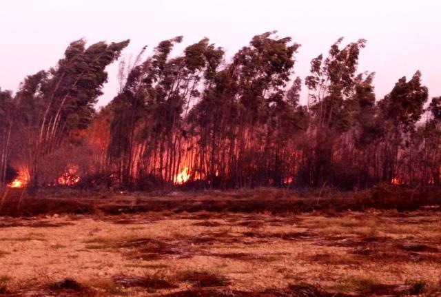 Muğla'da Farklı İlçelerdeki Sazlık Alanlarda Yangın