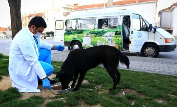 Kısıtlamada Sokak Hayvanları Büyükşehir'e Emanet