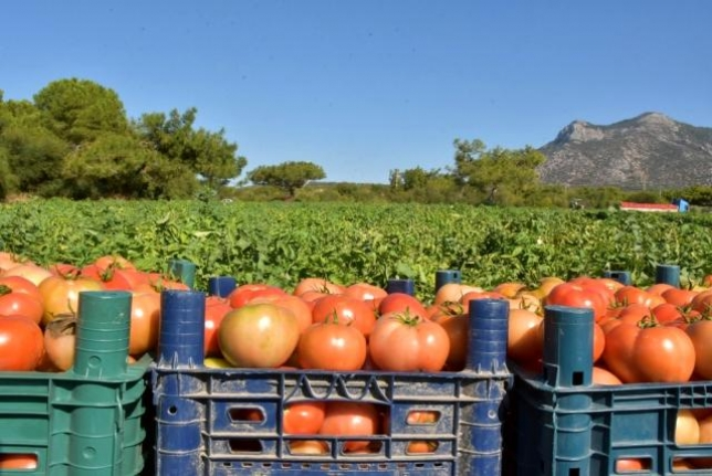 Üreten Çiftçilerin Kısıtlama Yok! İlçe Tarım Müdürlüklerinin Telefon Numaraları