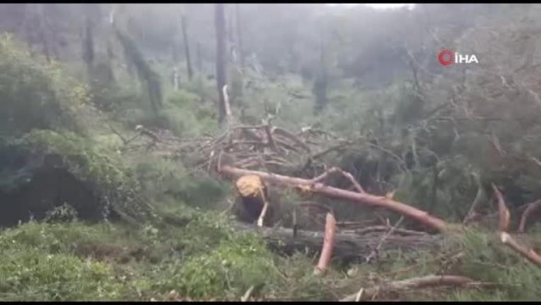 Fethiye'de Oluşan Hortum, Ormanı Savaş Alanına Çevirdi