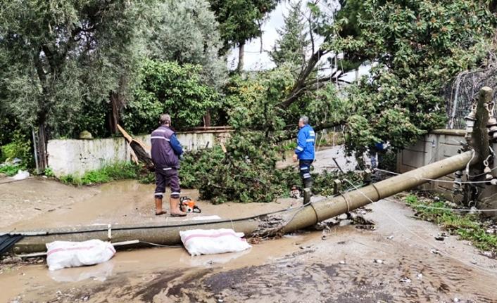 Muğla'da Kuvvetli Rüzgar Bazı Ağaçları ve Elektrik Direklerini Devirdi