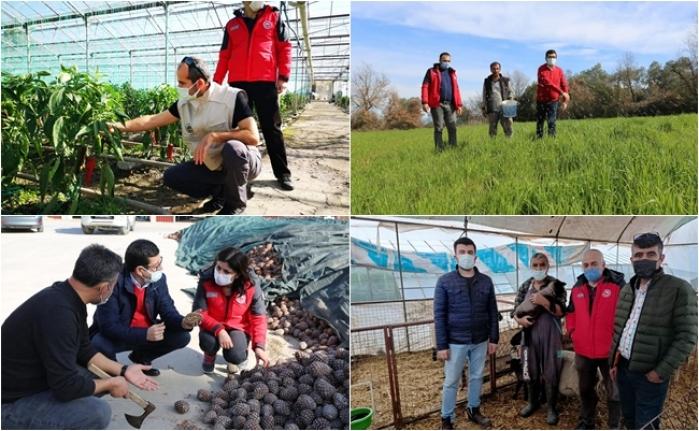 Muğla'da Üreticiler 'Pandemiyi' Fırsata Çevirdi