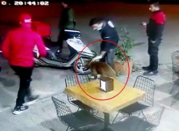 Bodrum'da Meydana Gelen Pitbull Saldırısı Kamerada