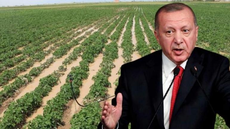 Erdoğan'ın Talimatıyla Çiftçinin Elinde Kalan Patates, Soğan ve Çeltik Satın Alınarak Vatandaşa Dağıtılacak