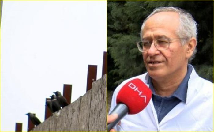 Koronavirüs Kabusu Bitmeden İstanbul'da Batı Nil Virüsü Tespit Edildi