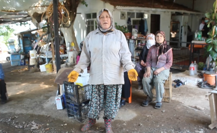 """Köyceğiz'in Toparlar Mahallesinde Köylüler İsyan Etti! """"TOKİ Zeytinliklerimizi Sattı"""""""