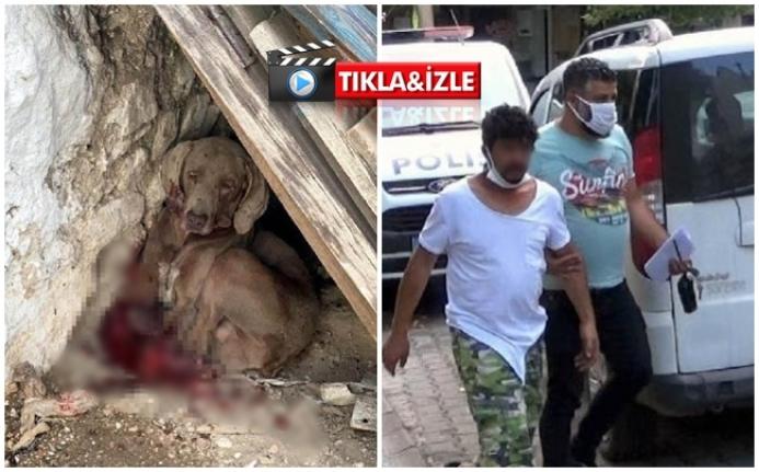 Menteşe'de Güvercinlerine Saldıran Köpeğini Öldürdü