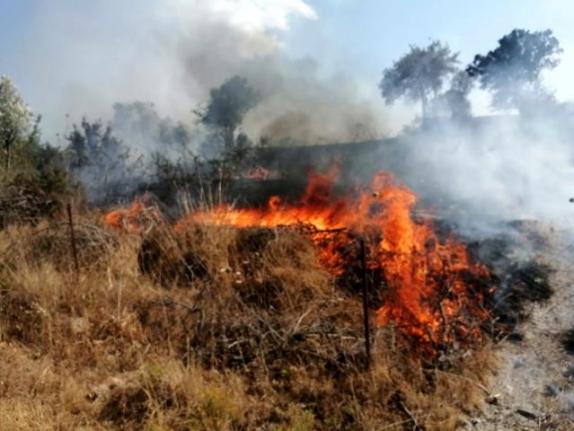 Milas'ta Korkutan Yangın!