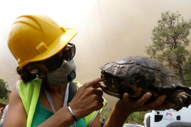 Köyceğiz'de Dumanlar İçerisinde Kalan Kaplumbağaya Ekiplerden Can Suyu