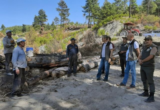 Muğla'da Yanan Alanlar Fidan Dikimine Hazırlanıyor