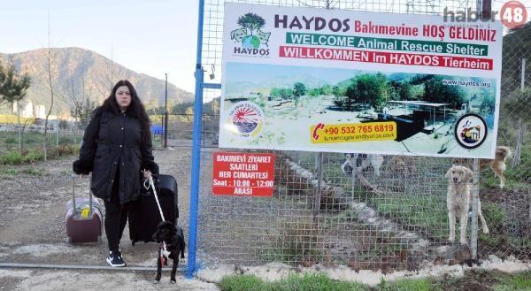 Fethiye'de Koca Şiddetinden Kaçtı, Hayvan Barınağına Sığındı