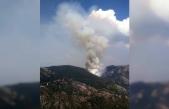 Milas'ta Çıkan Orman Yangını Kontrol Altına Alınmaya Çalışılıyor