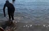 Fethiye'de Zıpkınla 35 Kilo Ağırlığında Akya Balığı Yakaladı