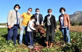 Anavatanı Güney Amerika Olan 'Tatlı Patates' Muğla'da Yaygınlaşıyor