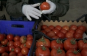 Muğla'dan 2020'de 39 Ülkeye 90 Bin Ton Yaş Sebze ve Meyve İhracatı Yapıldı