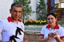 MUĞLA'DA BELEDİYE ÇALIŞANLARI YAVRU EBABİL KUŞLARINA SAHİP ÇIKTI