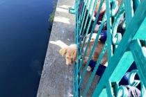 Kafası Sıkışan Yavru Köpeği İtfaiye Kurtardı