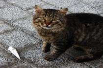 Muğlalı Balıkçıların Balon Balığı Sorunu: Kedi Bile Yemiyor!