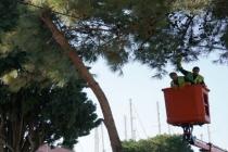 Cami Bahçesindeki Ağaçta Mahsur Kalan Kedi Vinçle Kurtarıldı