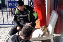 Hayvan Dostu Bodrum Polisinden Örnek Davranış
