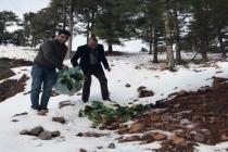 Karlı Alanlara Yaban Hayvanları için Hububat Bırakılıyor