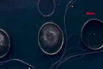 Çiftlik Balığı Deniz Balığından Nasıl Ayırt Edilir?