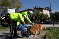 Fethiye'de Polis, Sokak Hayvanlarına Mama Bıraktı