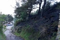 Muğla'da, 2 Dönüm Orman ve 25 Dönüm Sazlık Alan Yandı