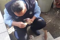 Ortaca Belediyesi Annesi Ölen Yavru Kedilere Sahip Çıktı